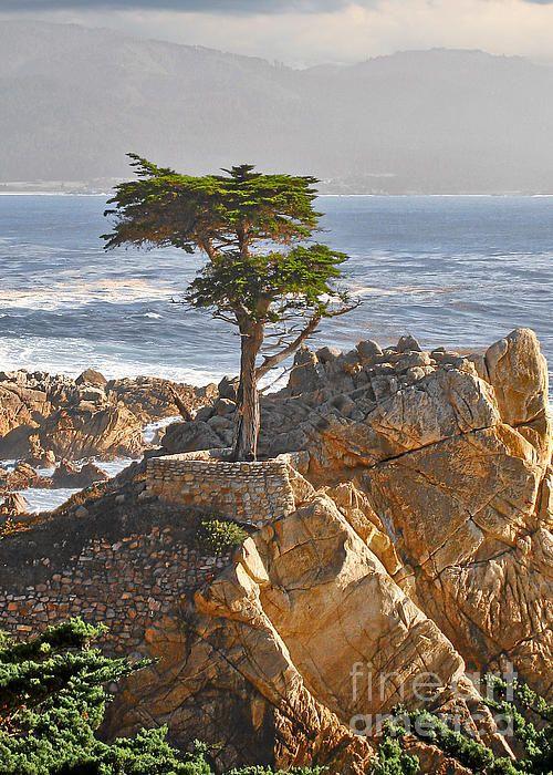 The Icon Of Pebble Beach California