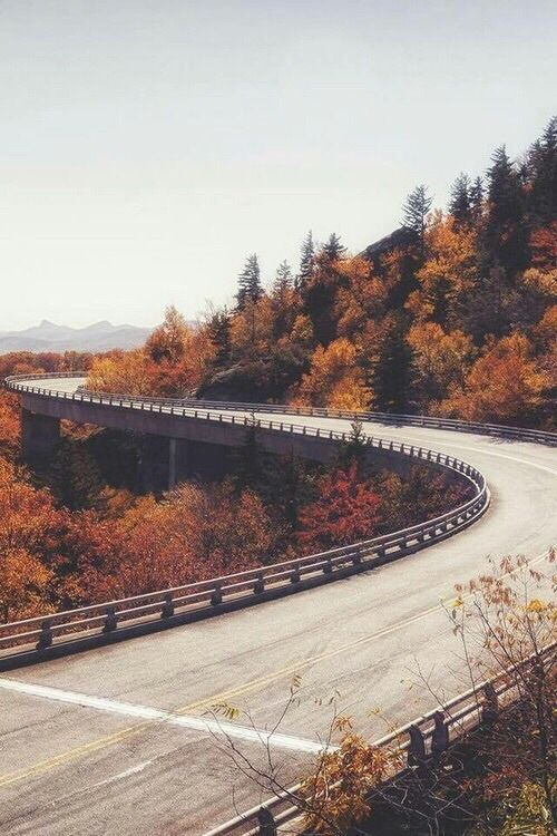 ~ Autumn Wonderland ~ WeHeartIt #OuivitaFamily -  Tumblr Site Blog - #Autumn #OuivitaFamily #WeHeartIt #Wonderland #fallbackgrounds