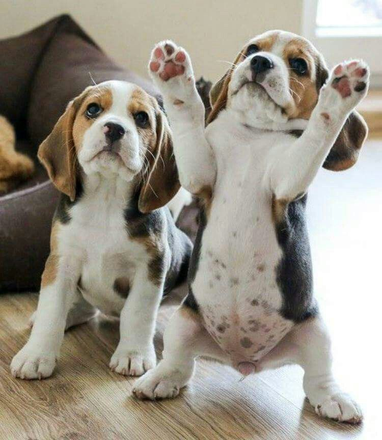 Pin By Carmen On Adorable Puppies Cute Animals Cute Baby
