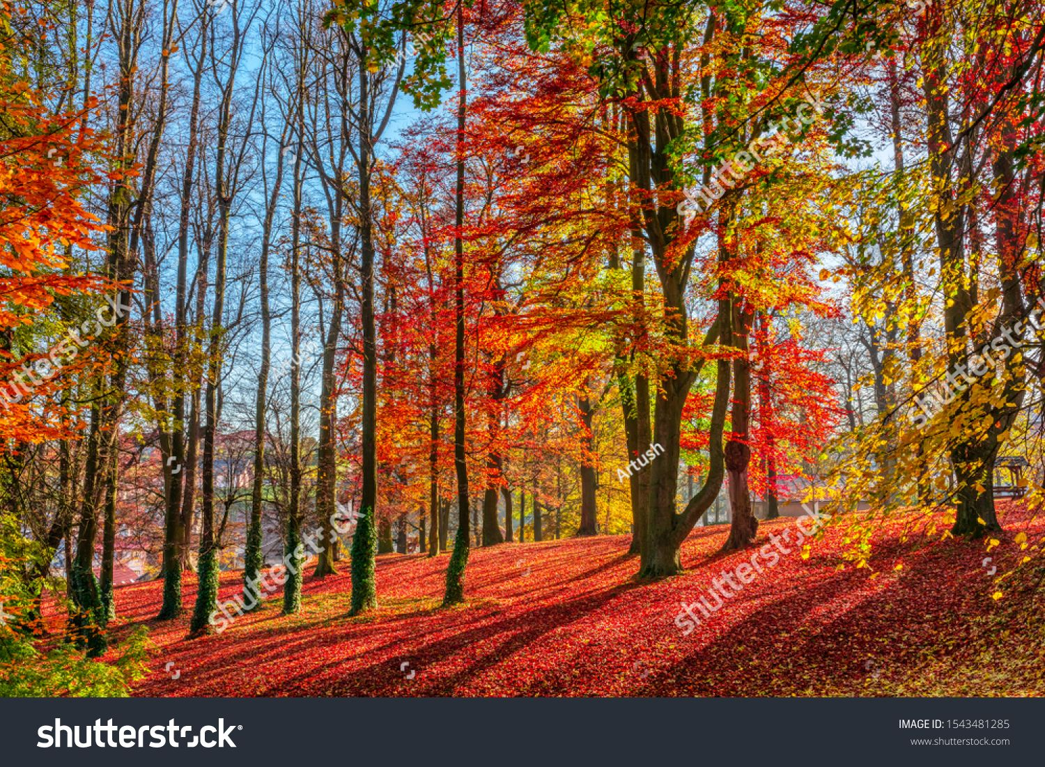 Romantic fall colored park with trees and morning sunlight. Autumn season natural background. Fall concept in park. Vivid colorful natural scene. Europe #Ad , #ad, #morning#trees#Autumn#sunlight