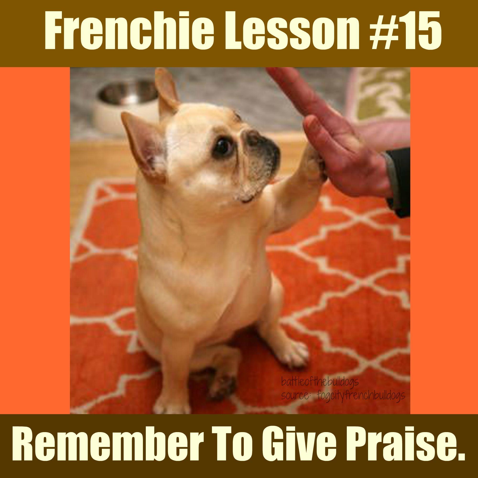 Frenchie Lesson 15 Bulldog French Bulldog Animals