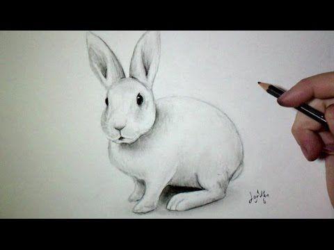 Comment dessiner un lapin tutoriel dessin pinterest charcoal drawings drawings and graphite - Comment dessiner un lion ...