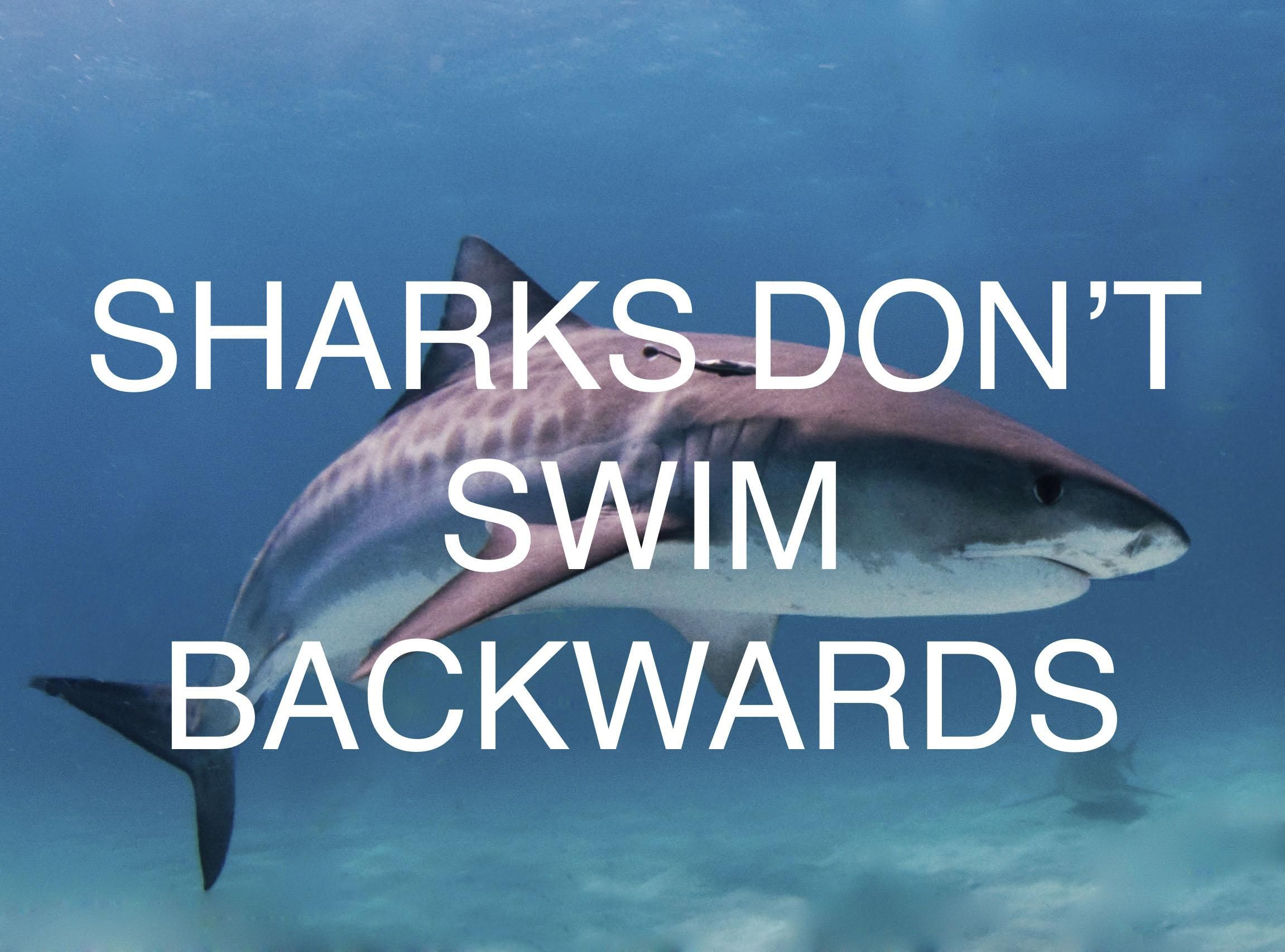 Sharks don't swim backwards     inspirational & motivational