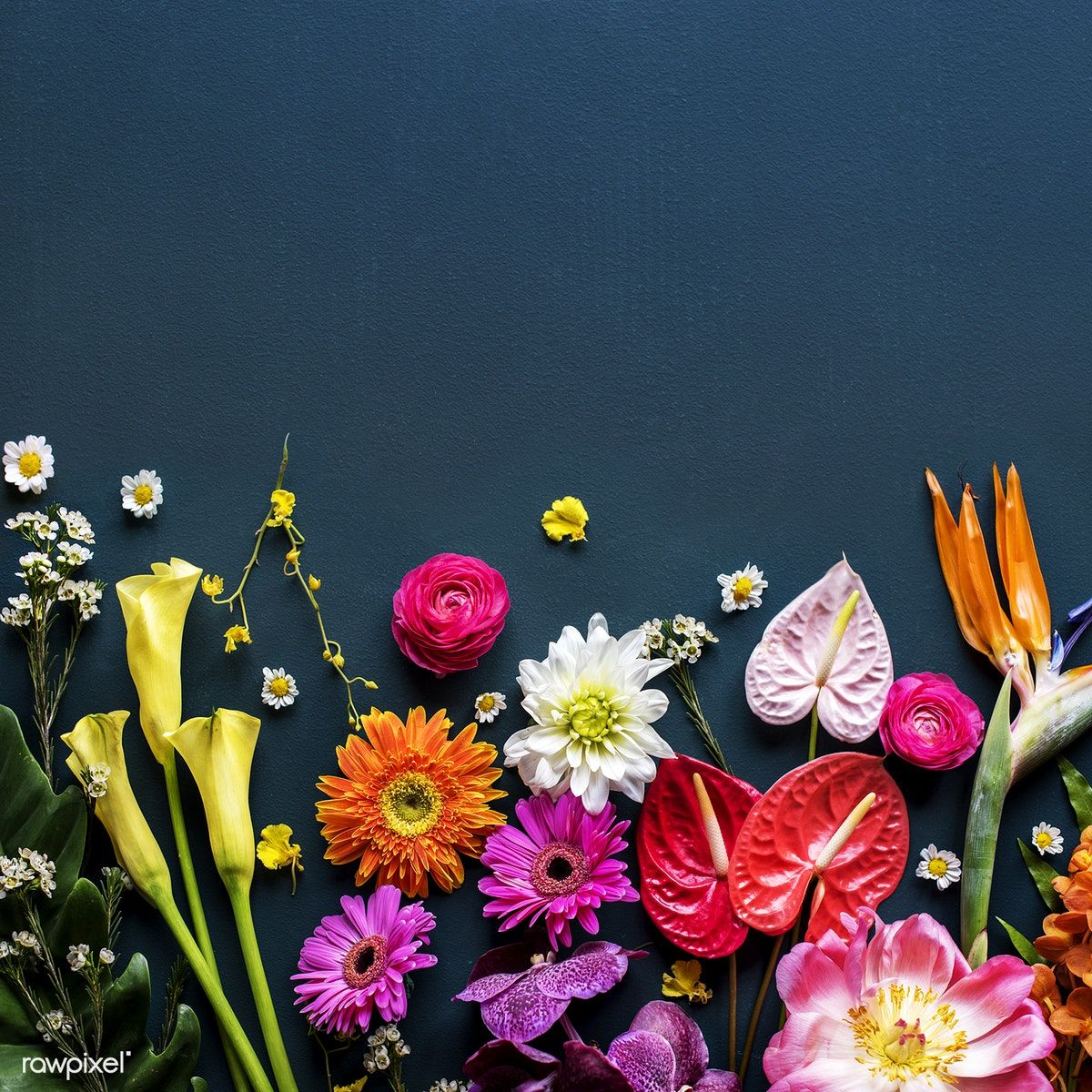 Colorful tropical flowers on black background premium image by