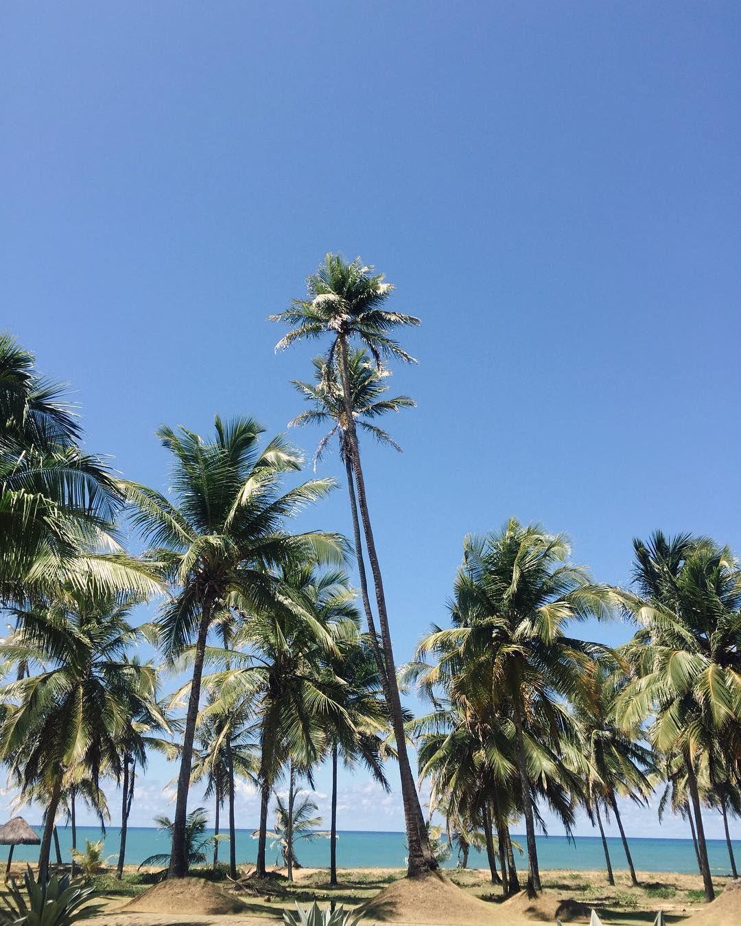 Not bad for a working sunday  Dia delicia de trabalho aqui na Praia do Forte! Mais sobre esse novo projeto no SNAP: GESTUPIDAS by camilacoutinho