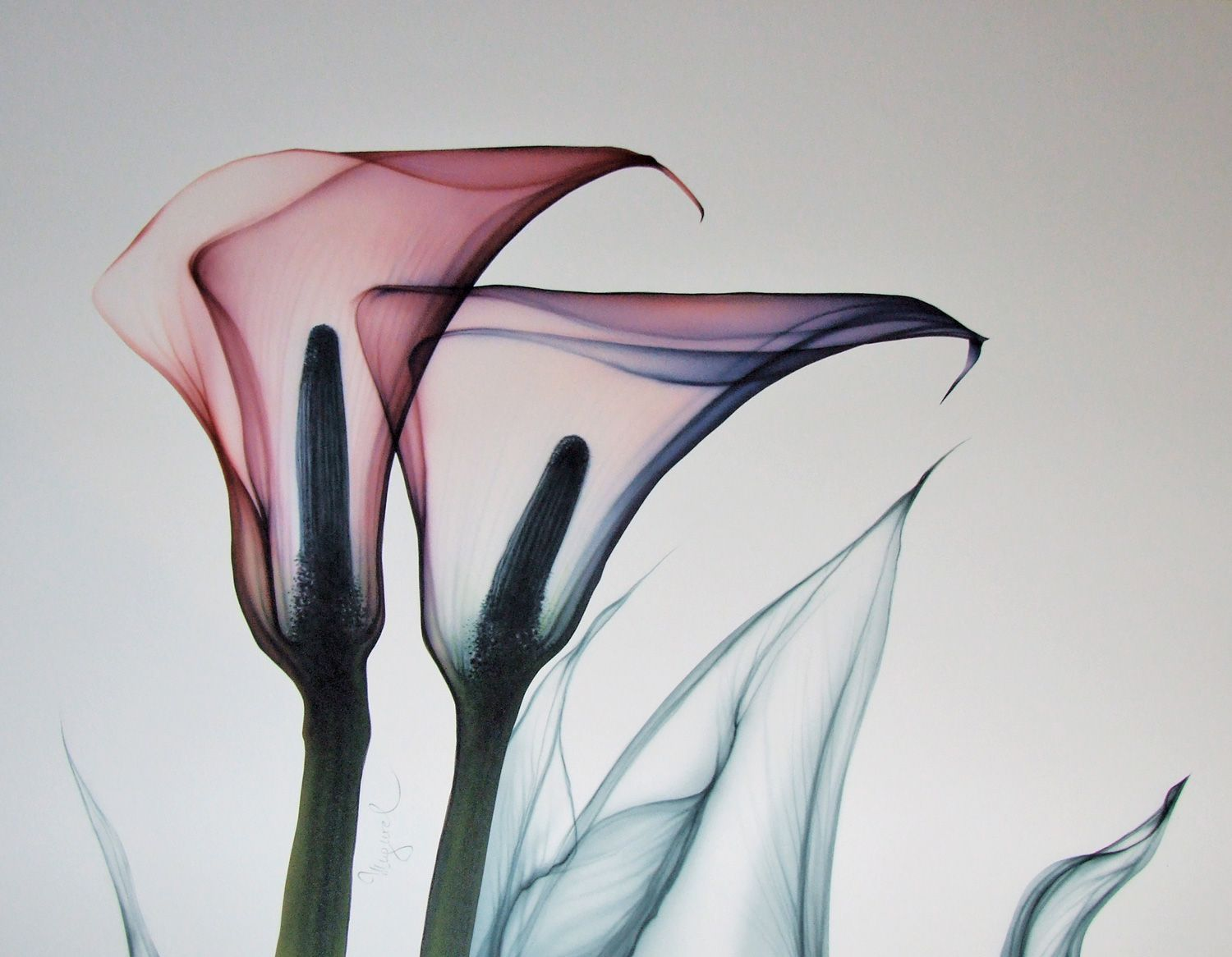 Flower copy from x ray photo art inspiration pinterest flower copy from x ray photo izmirmasajfo