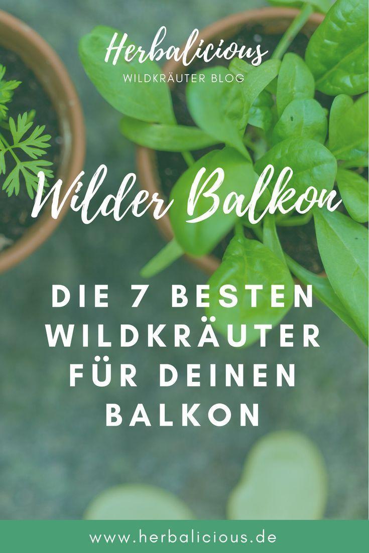 Die 7 besten Wildkräuter für den Balkon #kräutergartenbalkon