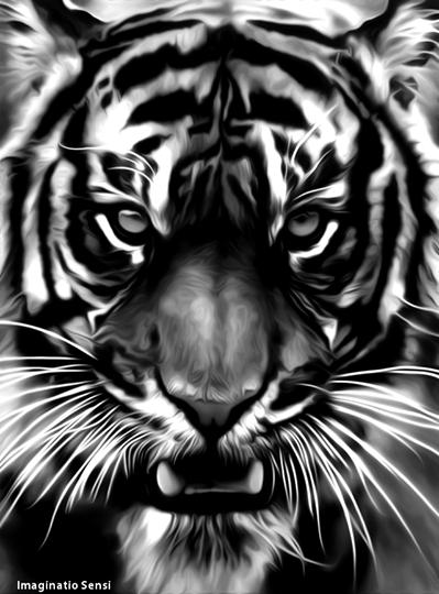 Tiger by Ponthieu