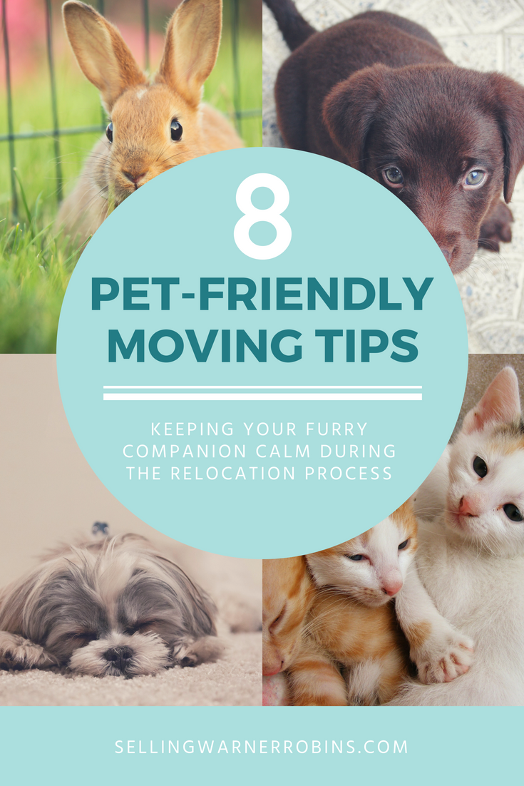 Relocation Tips When Moving With Pets Moving Tips Pets Moving To Another State