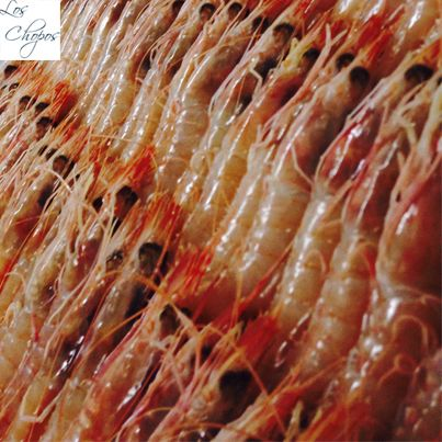 Gamba roja de Huelva. Estamos obsesionados con que el marisco vaya del puerto a la mesa.