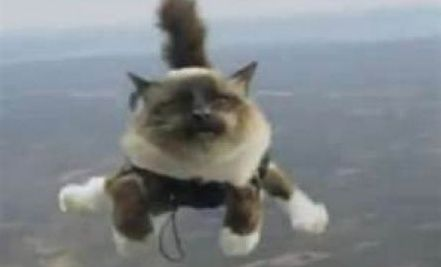 Skydiving Cats Controversy Cats Cool Pets Feline