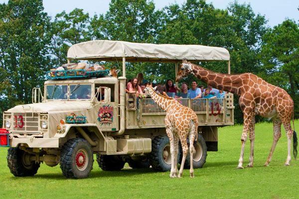 Safari Off Road Adventure Six Flags Great Adventure Greatest Adventure Off Road Adventure