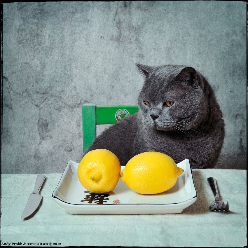 photo: Two Lemons photographer: Andy Prokh