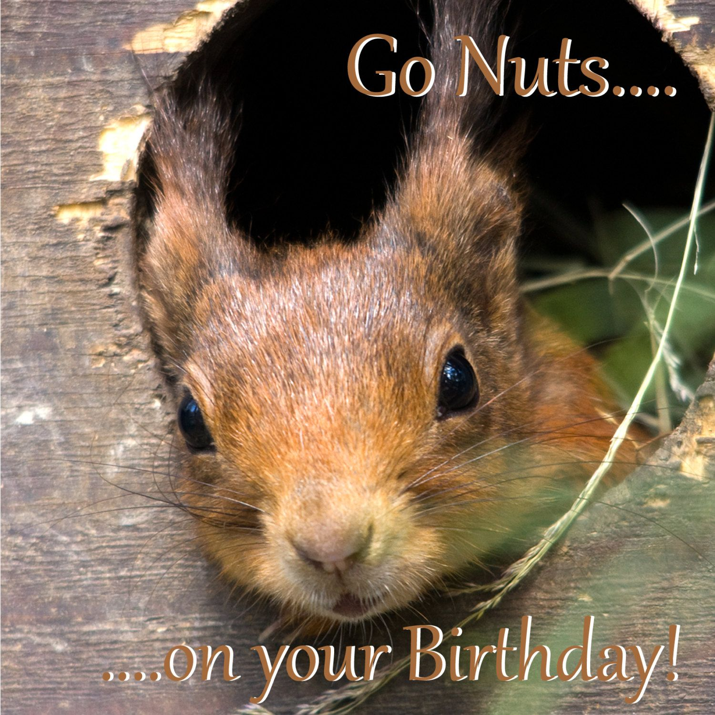 Birthday Card Squirrel Go Nuts On Your Birthday Funny Squirrel Photo Blank Gree Happy Birthday Greeting Card Birthday Greeting Cards Cat Birthday Cards Funny