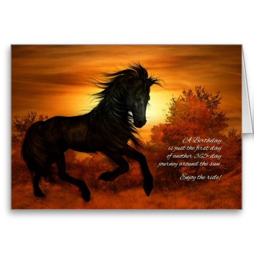 Birthday Horse In The Sunset - Funny Card
