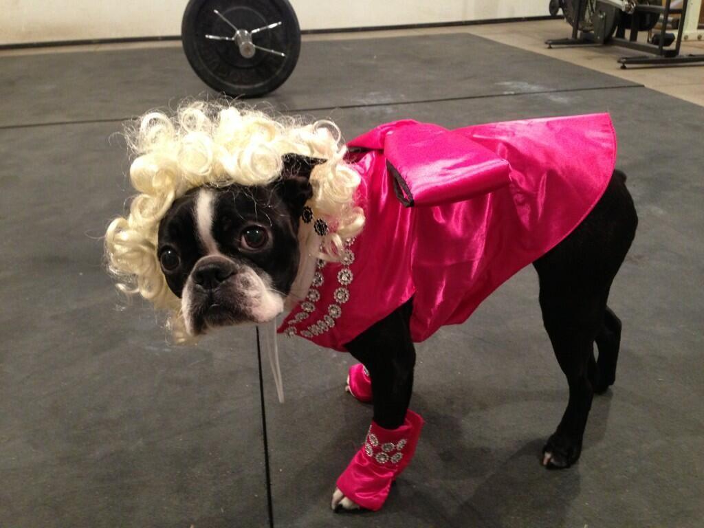 marilyn monroe costume of a boston terrier dog - Halloween Costumes In Boston