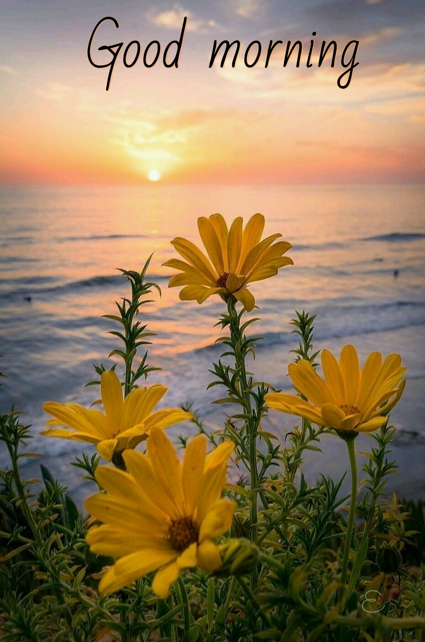 Good Morning Good Morning Good Night Pinterest Sunset