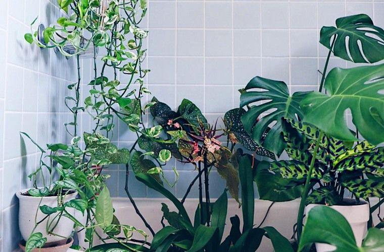 Shower Plants Create Tropical Spa Experience The Home Pinterest Shower Plant Plants And Bathroom