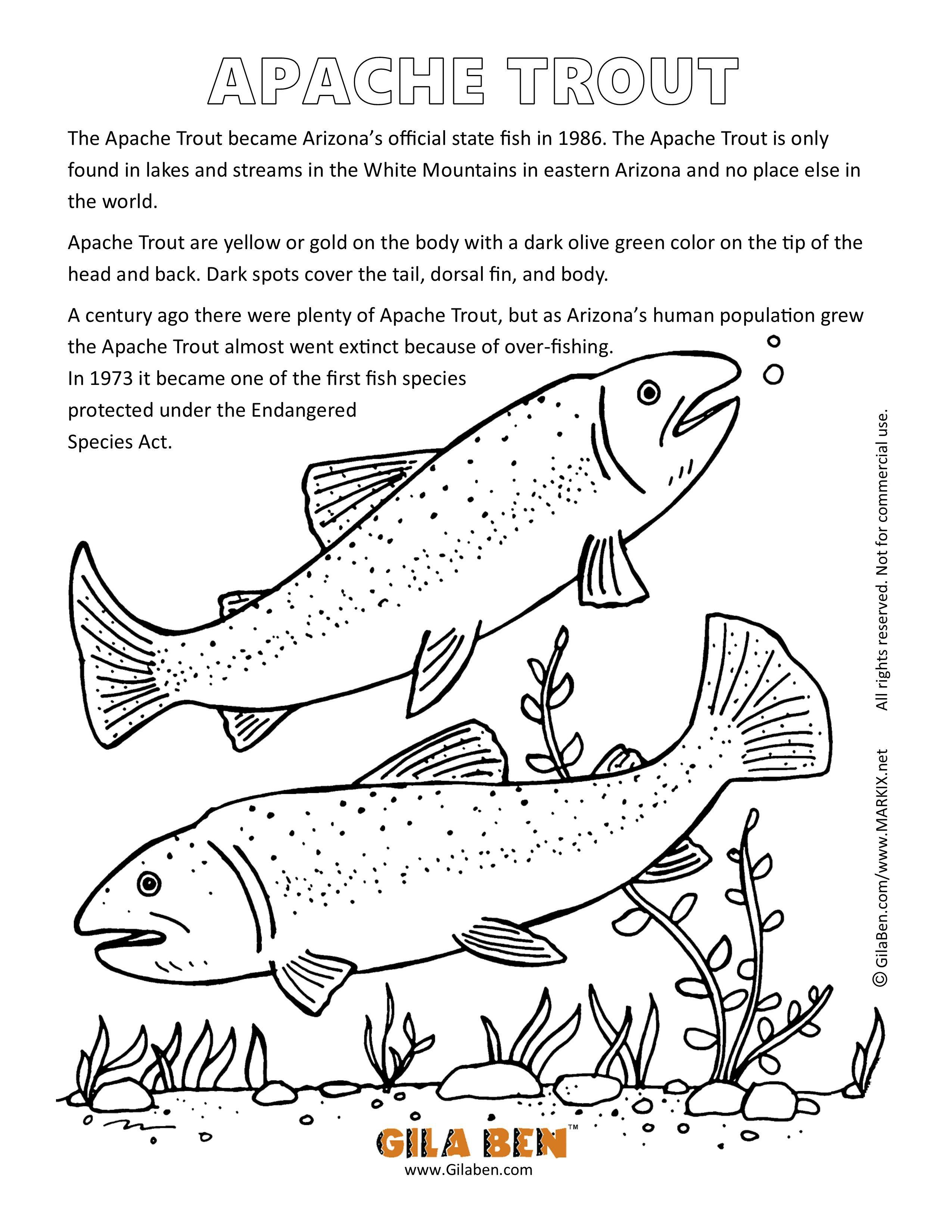 Az Facts Coloring Sheets Apache Trout Coloring Page Flag