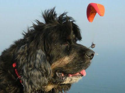 Dutch Air - Google+ Thank God it's Friday!! Enjoy your weekend and snuff a nice fresh breeze through your nose!! www.dutchair.eu     #weekend   #weekendfun   #weekendgetaway   #fresh   #air   #freschair   #can   #blik   #blikje   #blikjes   #blikken   #gebakkenlucht   #dog   #cadeau   #leukcadeau   #grappig   #hond   #nice   #humor   #humoroftheday   #love   #ilovedogs   #flying   #flyby   #dutch   #dutchair   #air   #cannedair   #happy   #happyfriday   #shop   #shopping   #shoppingonline…