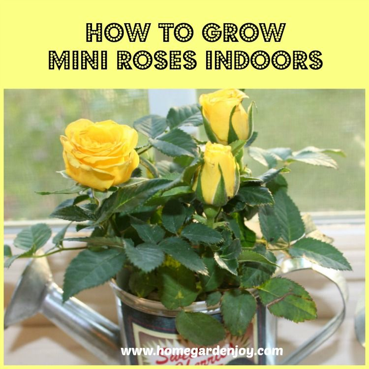 9 tips and tricks for growing indoor plants Idea Box by Stephanie ...