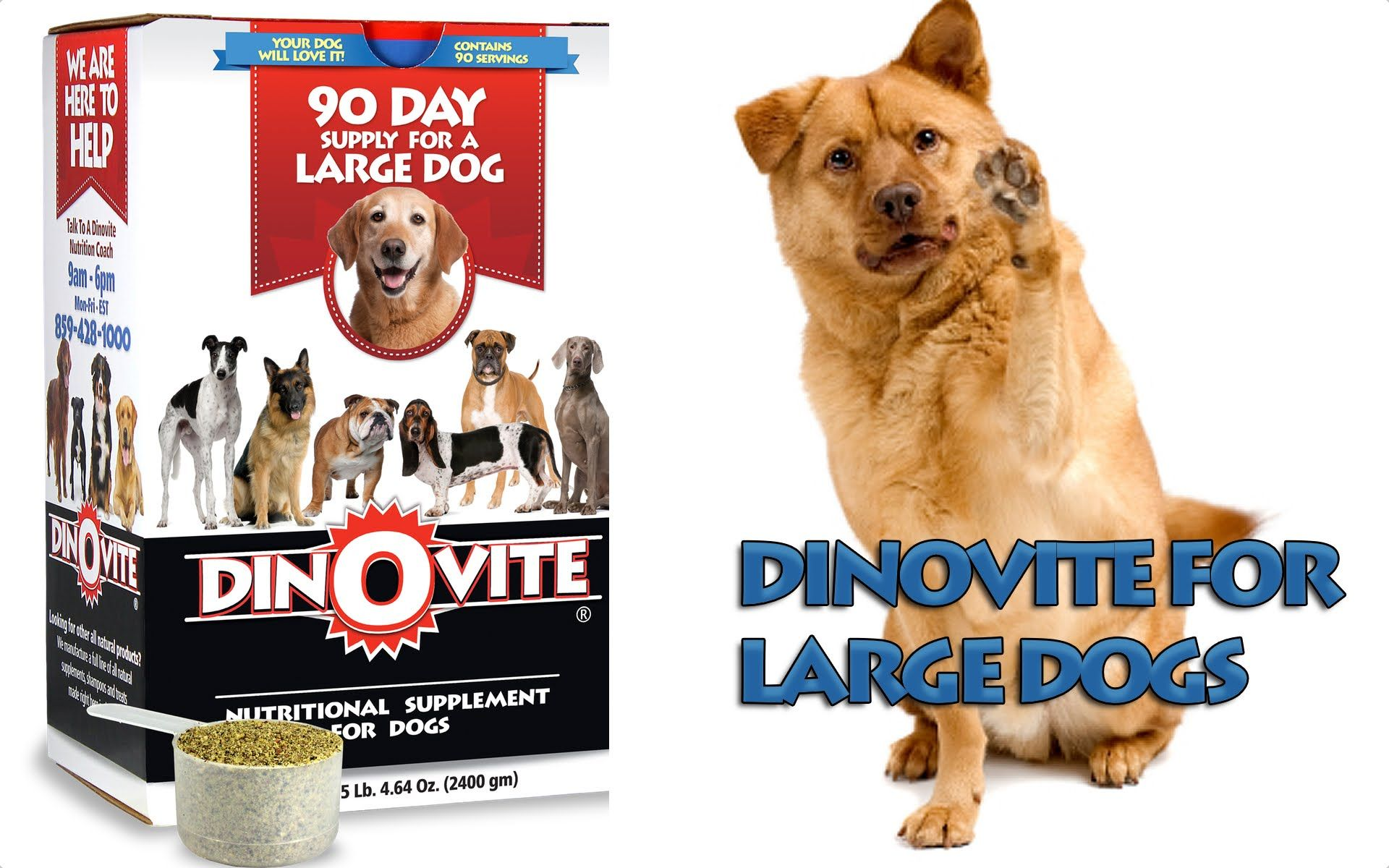 Dinovite For Large Dogs With Images Dogs Large Dogs Dog