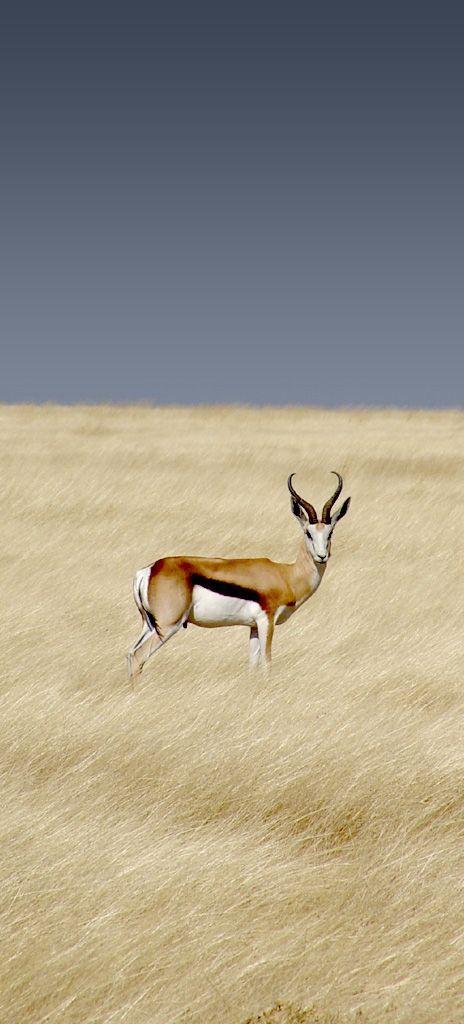 Beautiful animal ➰