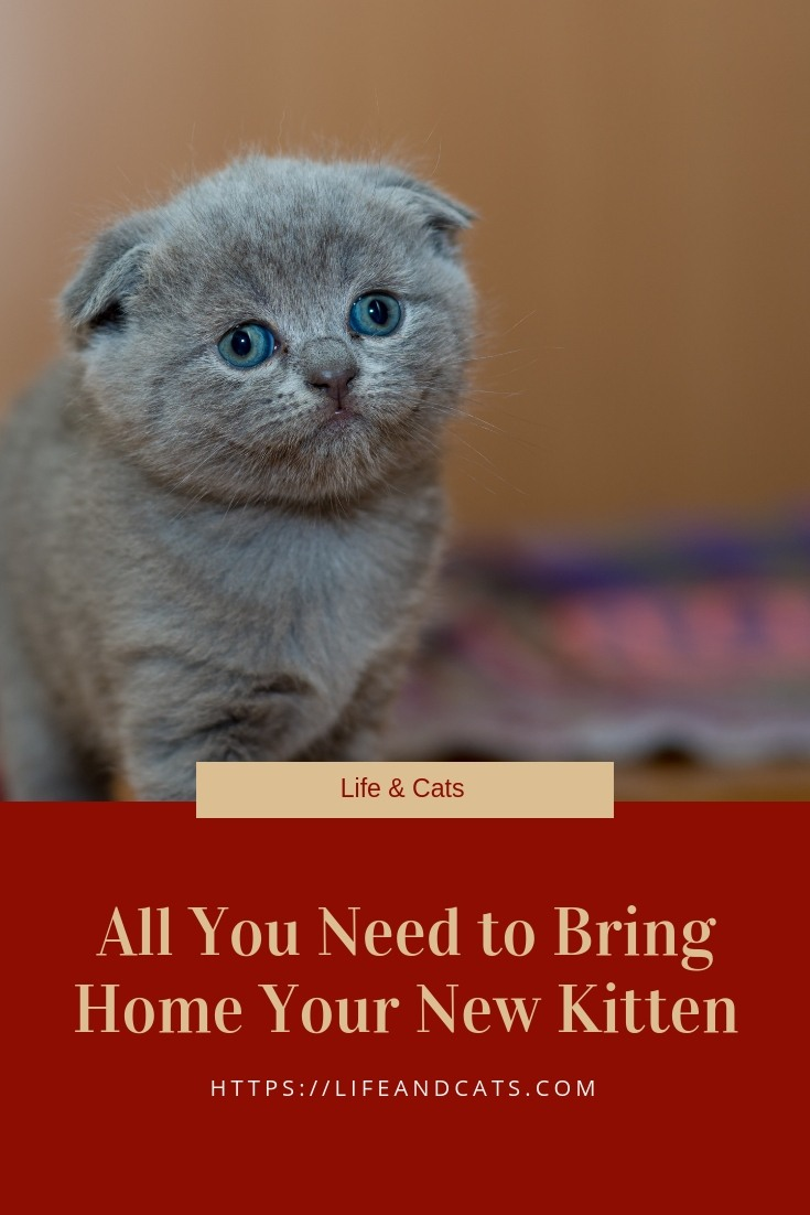 6 Tips For Preparing To Bring Home Your New Kitten Cat Care Cat Grooming Stupid Cat