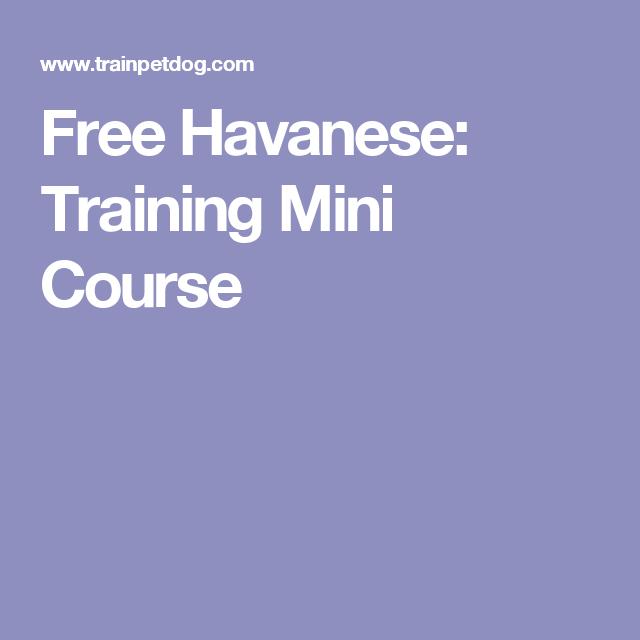 Free Havanese: Training Mini Course