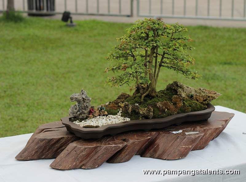 Penjing landscape bonsai bonsai shohin bonsai penjing for Bonsai hydrokultur