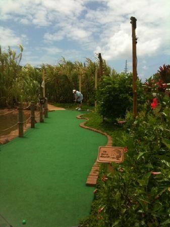 Inspirational Fig Garden Golf | Garden | Pinterest