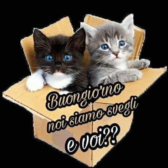 Buongiorno gatti buongiorno pinterest facebook for Buongiorno con gattini