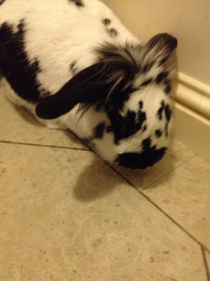 My bunny Peter Roy X
