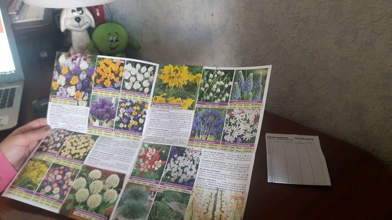 семена каталог 2018 официальный