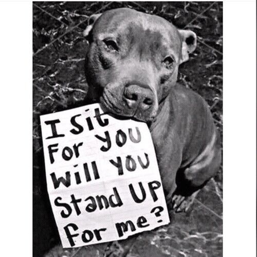 I Sit For You Will You Stand Up For Me Dogs Pitbulls