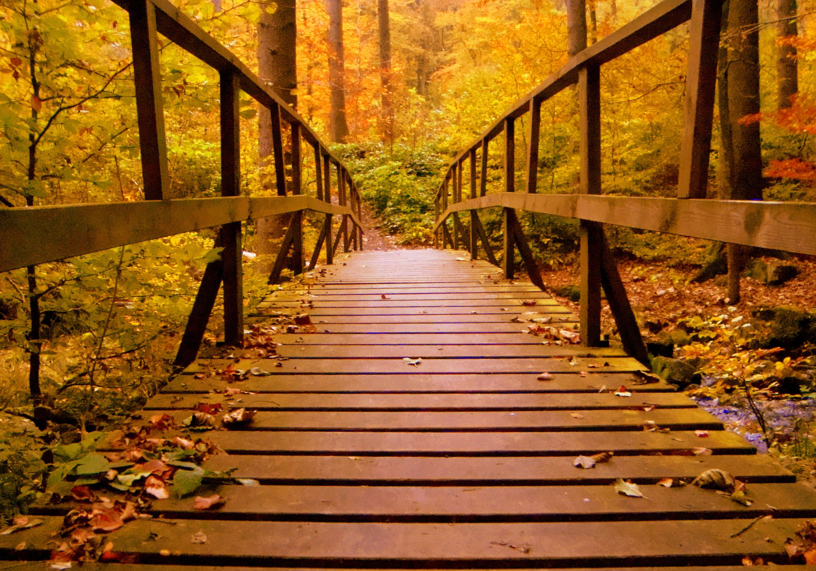 Fall Bridge Wallpaper for Chromebook ...
