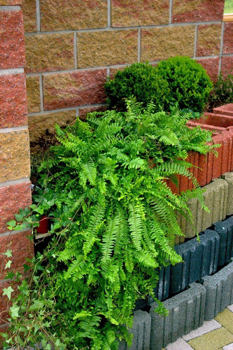 pflanzsteine-setzen-bepflanzen-rechteckig-farbe-mauer-farne | mauer