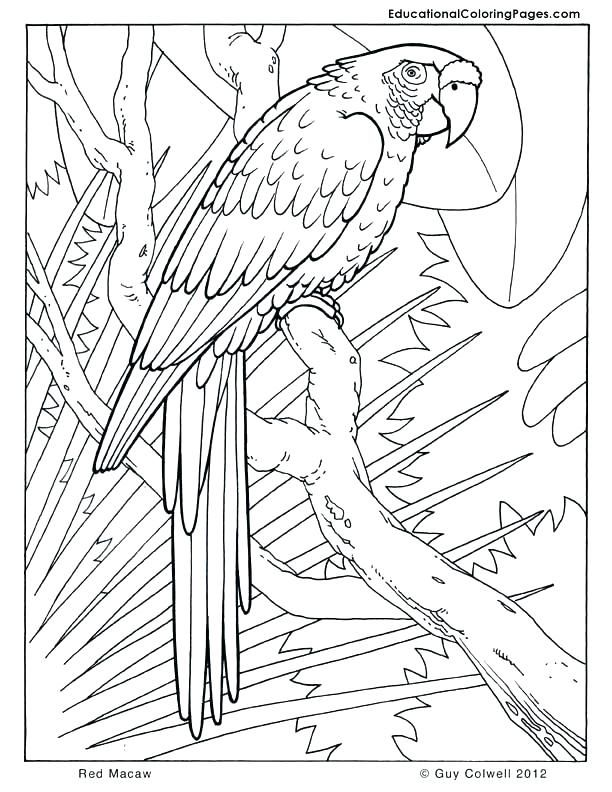 Safari Coloring Book As Unique Jungle Animal Pages For Kids Free Printable