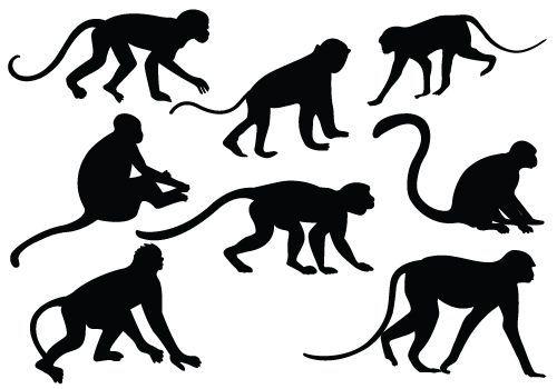Monkey Silhouette Black White Line Art Tattoo Tatoo Svg Sombras De Animales Tatuajes De Monos Siluetas Animales