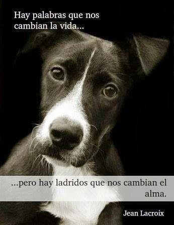 El Amor Más Puro E Incondicional Perros Perros Frases Y