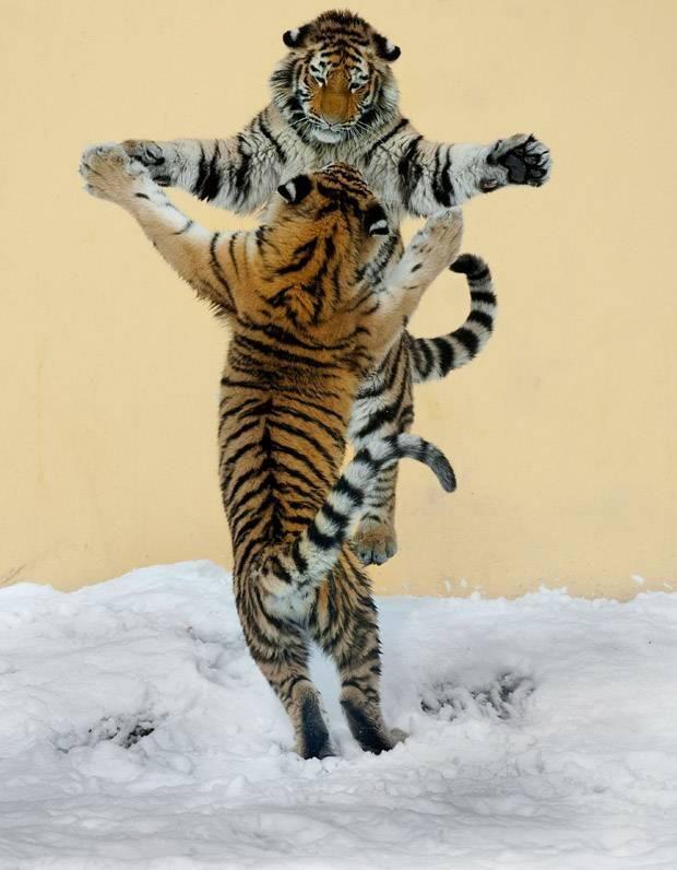 Siberian Tango !