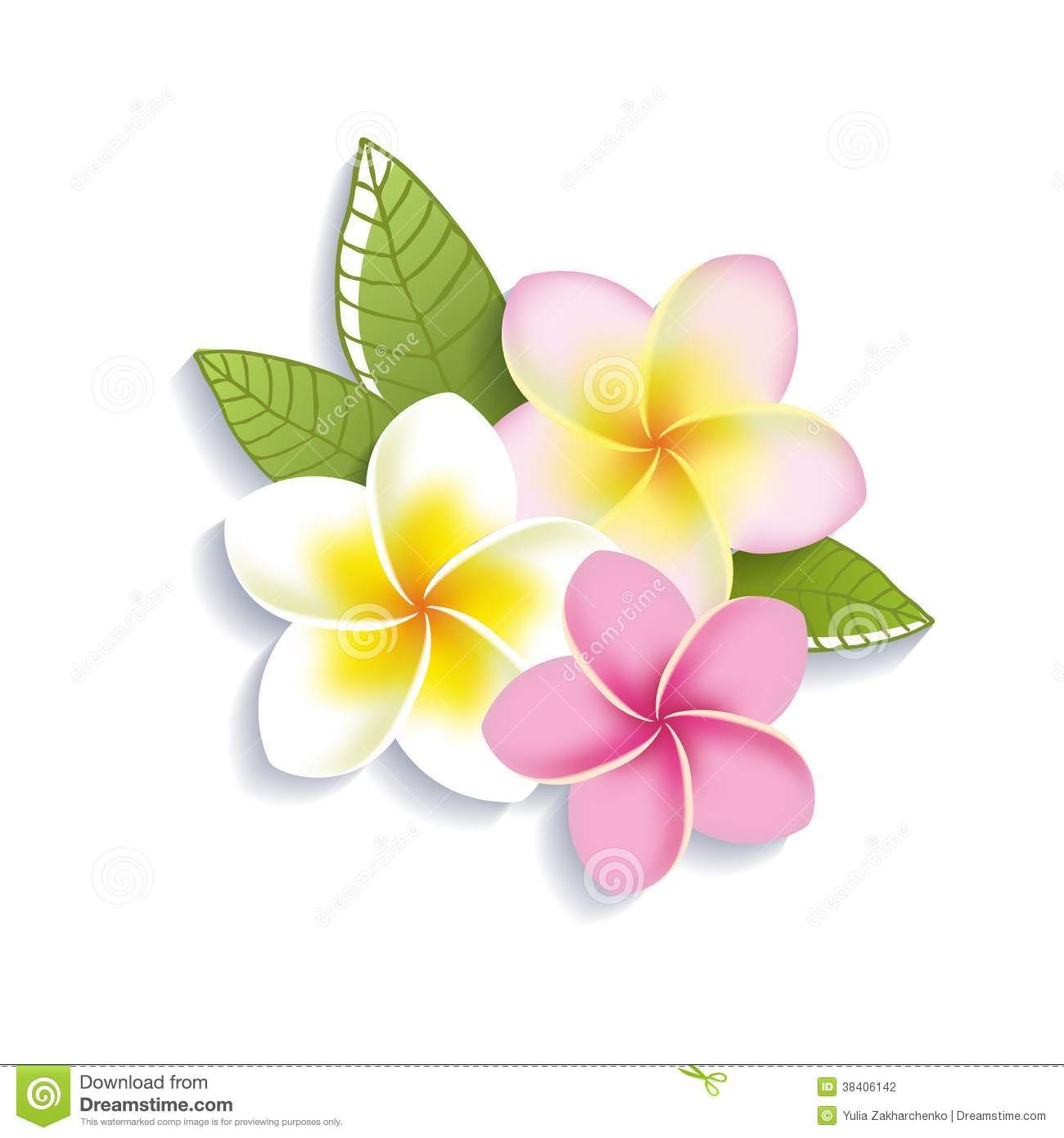 Vector Plumeria Flowers On A White Background Stock Photography Flower Clipart Plumeria Flowers Plumeria Flower Tattoos