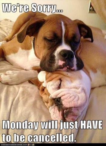 Afbeeldingsresultaat voor boxer dog monday meme