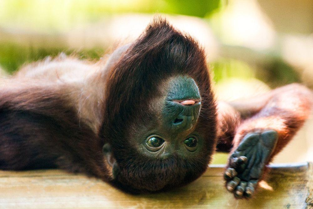 Photos of the Week: Animals, May 17 – May 24, 2014