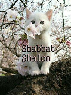 Shabbat Shalom With Images Shabbat Shalom Images Shabbat Shalom Shabbat