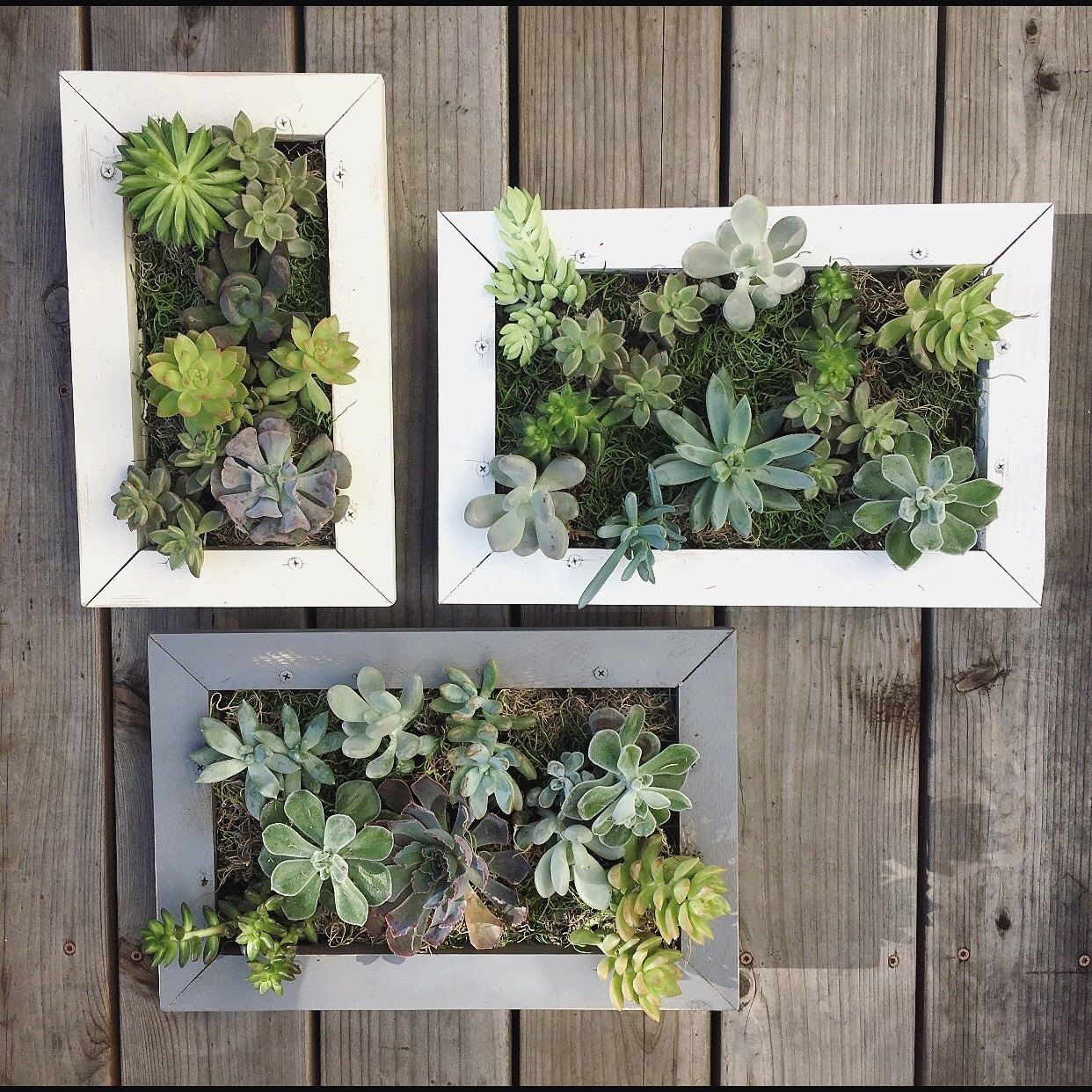 Hanging Living Wall Picture Frame Succulent Planter Box By Kelseygetskrafty On Etsy Https Www Etsy Succulent Wall Planter Wall Planters Indoor Succulent Wall