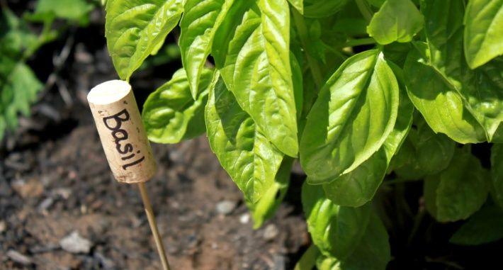 Wine cork as sign in garden