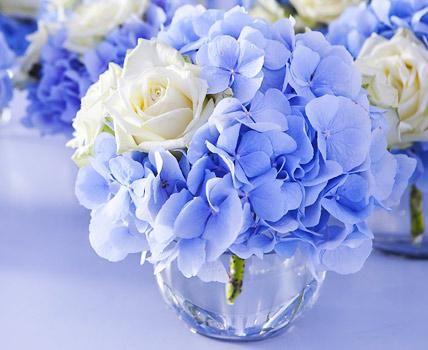 mit hortensien dekorieren: ideen für blühende arrangements: blaue, Garten ideen