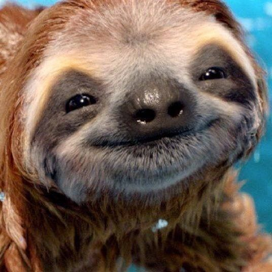 15 Adorable Sloths Here To Remind You To Slow Down And Enjoy Life - I Can Has Cheezburger?