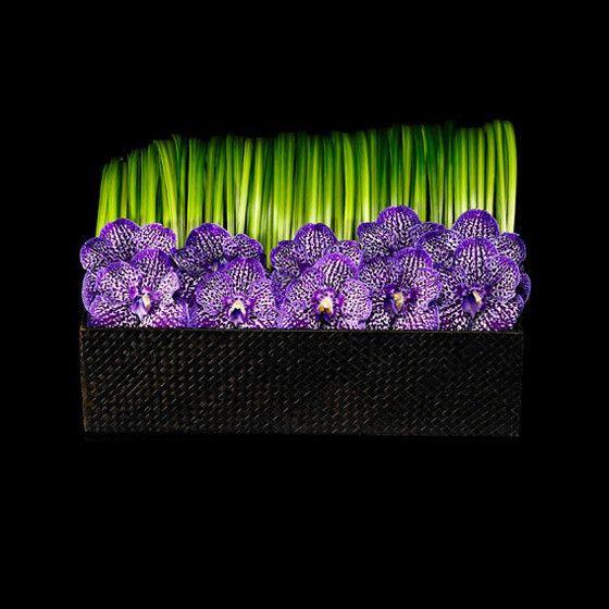 vanda orchid arrangement - Google Search